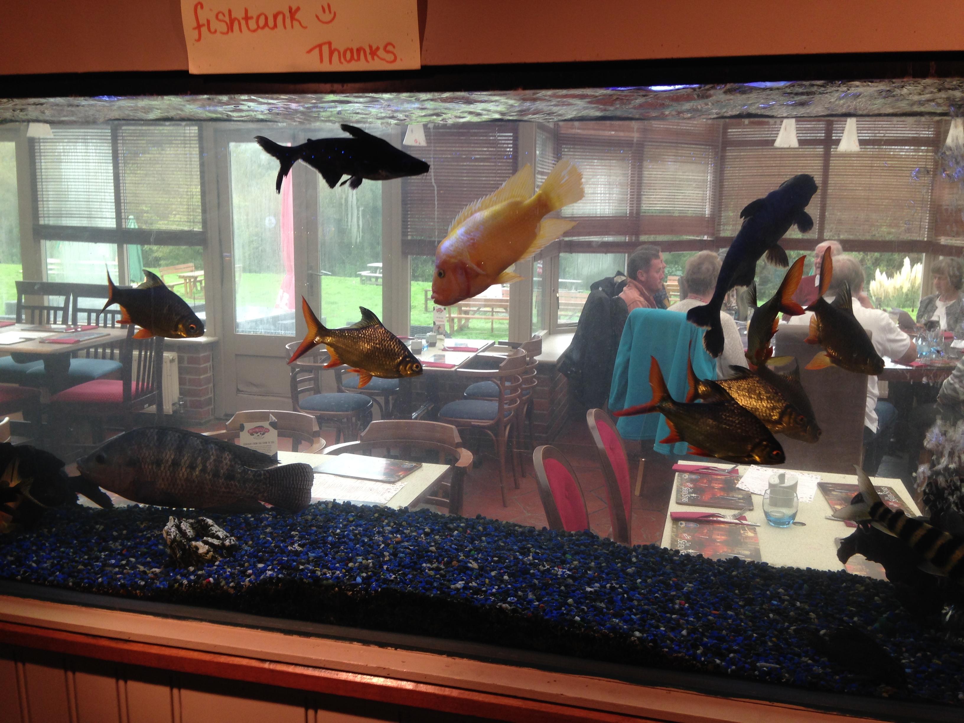 Seven Stars Fish Aquarium